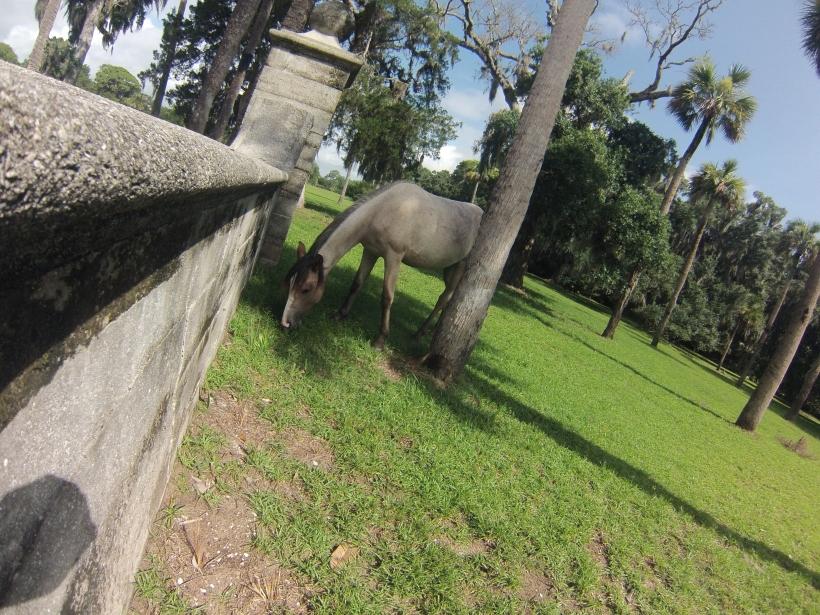Told ya...more horses